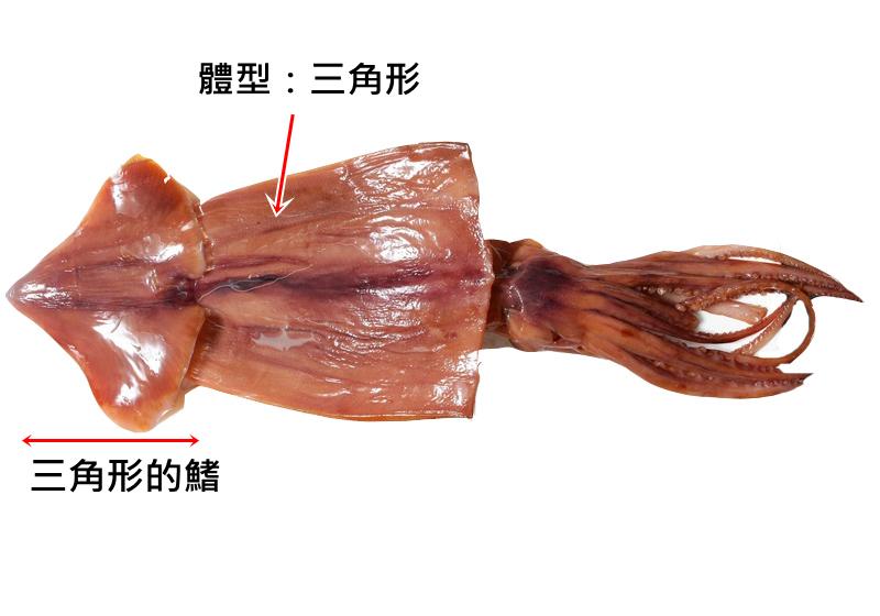 【图解】鱿鱼、透抽、花枝、软丝怎幺分?一篇搞懂!