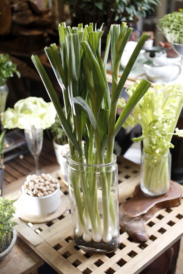蔬菜除了放冰箱保存,也能成为家中的美丽盆栽!
