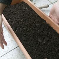 善用阳台空间!青江菜、香菜...在家动手种菜吃