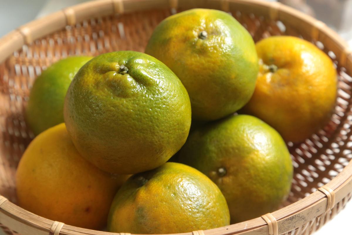 吃柑橘不丢柑橘皮!你意想不到的橘皮妙