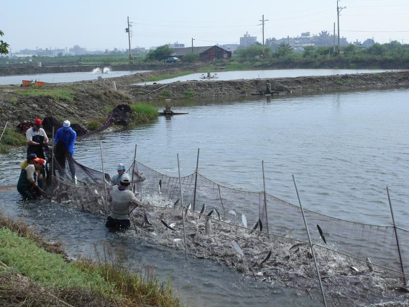 季节食材「牛奶鱼」虱目鱼,一次了解产地和产季!
