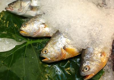 炸鱼油温怎幺测试?关于鱼料理,你该知道这 6 件事!