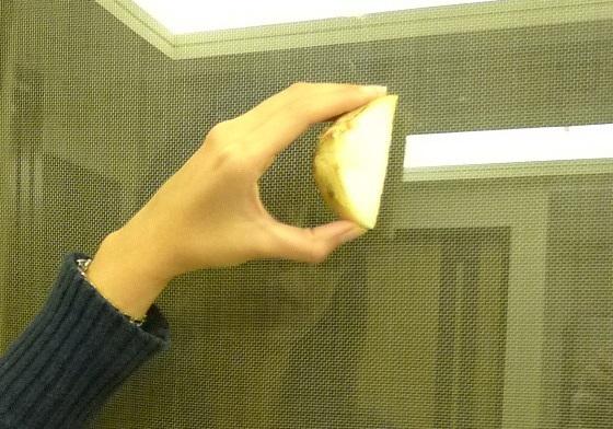 你绝对没想过!洋葱还能用来擦玻璃?